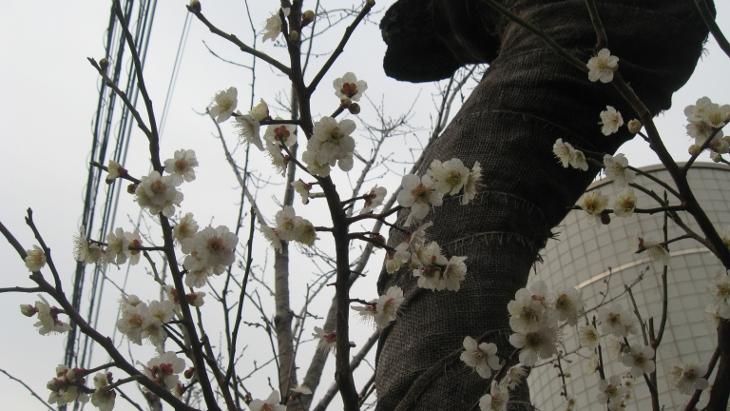 3月22日(木)